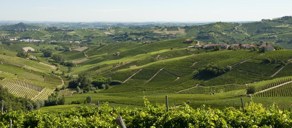Le colline di Castiglione Tinella.