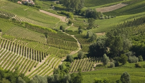 Una visuale su una delle vallate sottstanti Castiglione Tinella