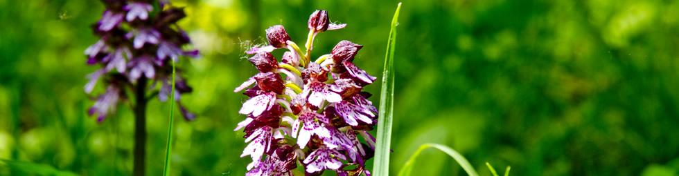 Il Giorno delle Orchidee.